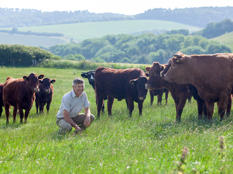 Farmer with his cattle
