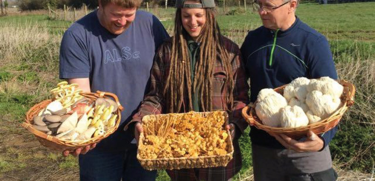 exotic mushrooms from the Isle of Wight